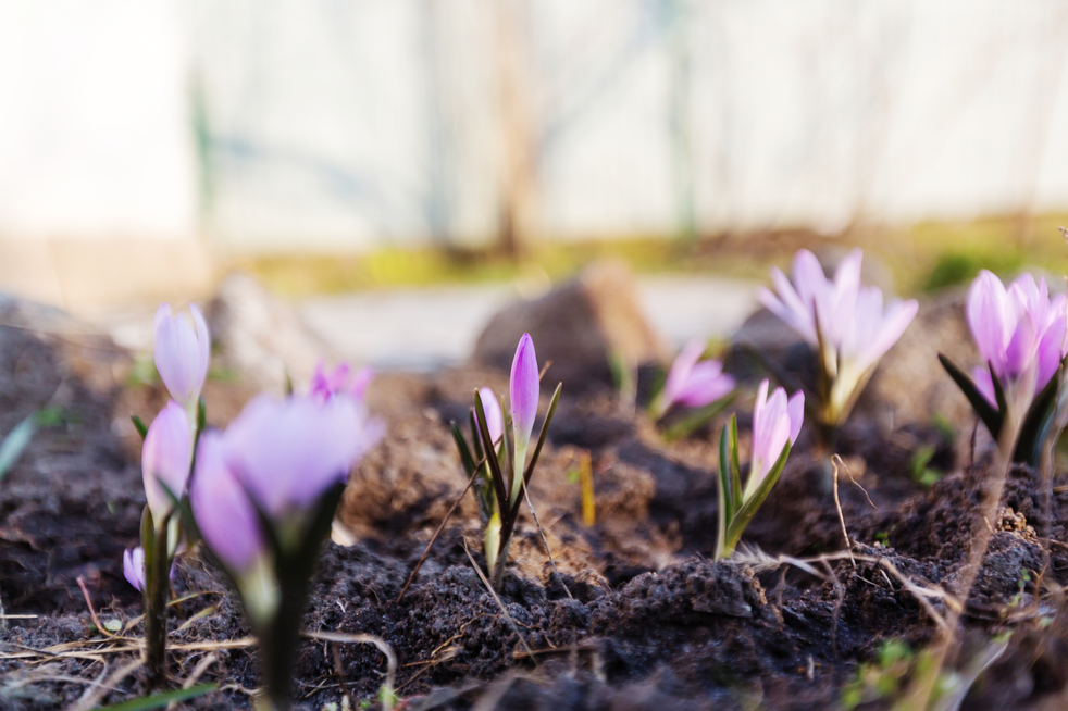 Flowers budding in spring to illustrate spring plumbing tips
